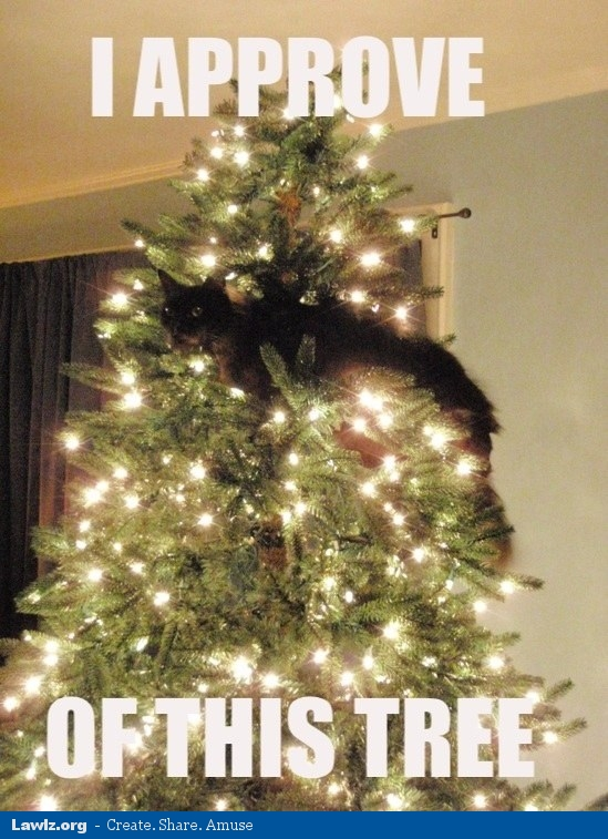i-approve-of-this-tree-christmas-cat-meme